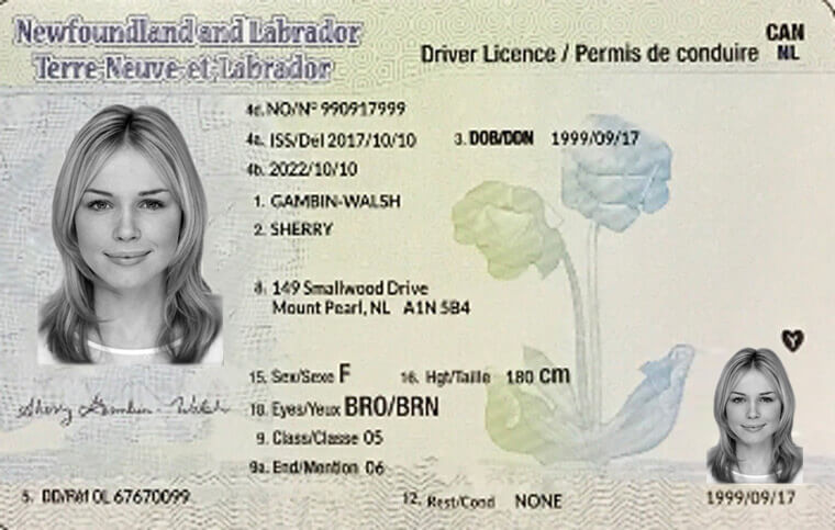 Free Nl Permit Test Practice New Driving Test Questions